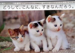 ねこ歩き A.jpg