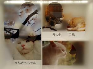 ねこ歩き B.jpg