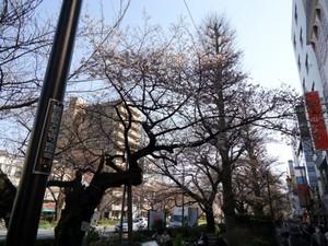 大学通り商店街.jpg