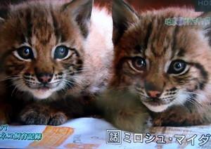 山猫 1.jpg