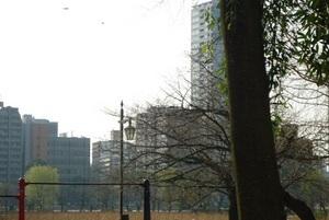2013 3 17 黒門より池之端を望む.jpg